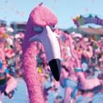Flamingo Pride online