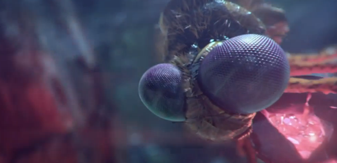 FMX 2014 Trailer
